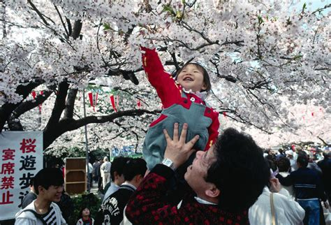 this beautiful cherry blossom festival will light up your