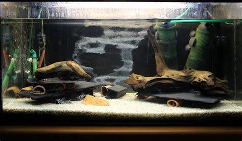 Aquarium Ohne Pflanzen Einrichten 6848 by Aquarium Ohne Pflanzen Einrichten Einrichtungsbeispiele F