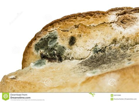 moldy bread close up isolated on white background stock