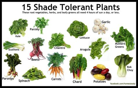 what garden vegetables like shade all my house plants are moved outside sondasmcschatter