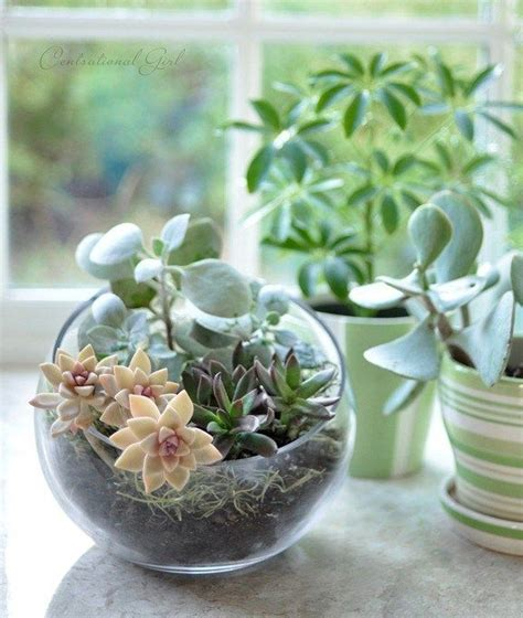 creative diy terrarium ideas  projects  creative