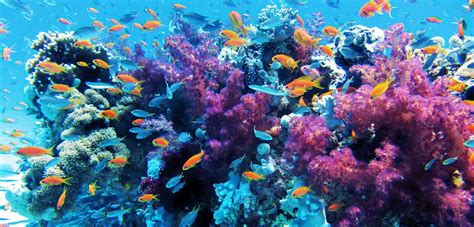 dive a diving or snorkeling in anilao janddytoursmanila