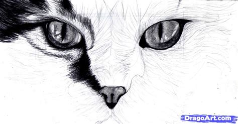 cat eye drawing how to draw cat eyes step by step pets animals free