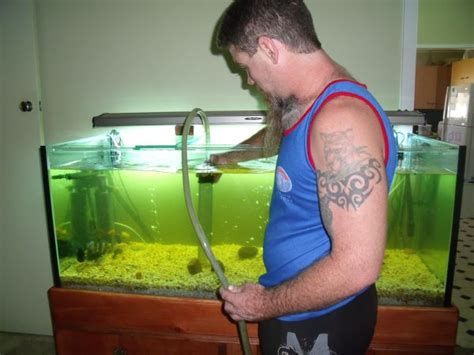 aquarium fish cleaners aquarium cleaner fish points to believe about ought to you need to