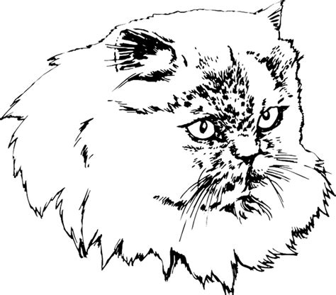 persian cat pokemon coloring pages sketch coloring page