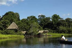 Plant Species In Tropical Rainforest - top 10 facts about the amazon rainforest the inside track