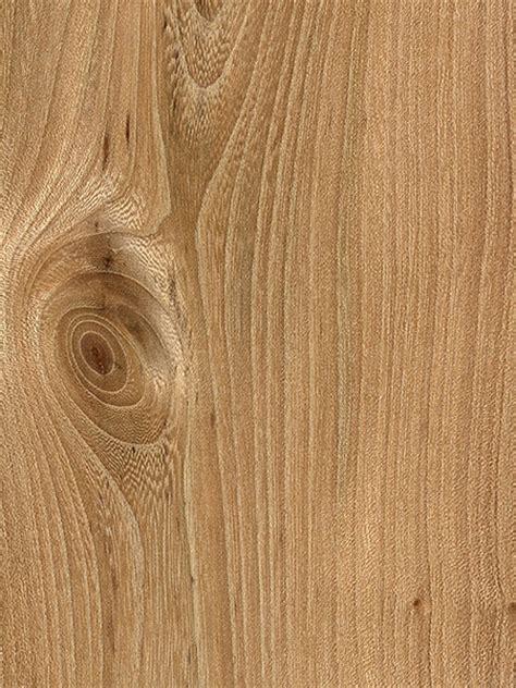 rock elm the wood database lumber identification