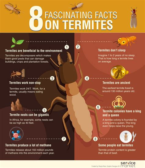 fascinating facts  termites  home project