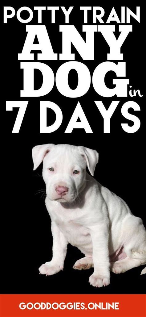potty a puppy in 7 days potty your in 7 days or less