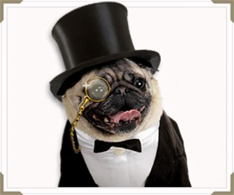pugs in suits a pug with in a suit with monocle and top hat that s it ads