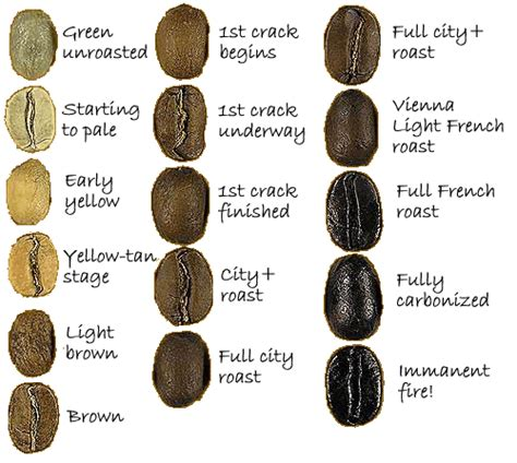 coffee beans types the coffee bean types coffee