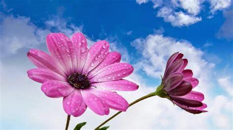 bunga cantik warna warni download wallpaper bunga 10 gambar bunga cantik dan indah gambar top 10