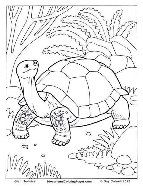 tortoise color tortoise coloring page coloring home