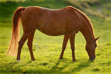 unire dati sella dothorse it il portale dei cavalli