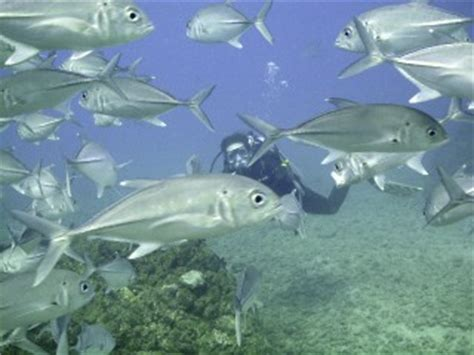 scuba diving and snorkeling tours cano island, costa rica