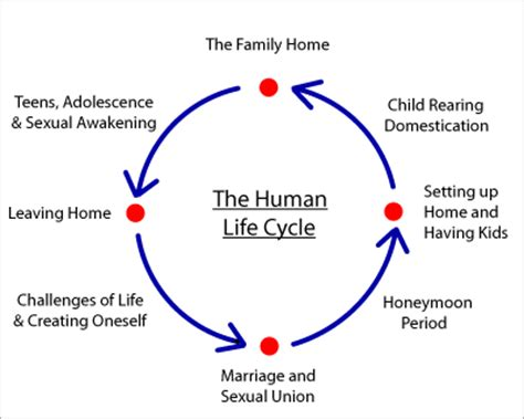this diagram of the human cycle shows that mythology