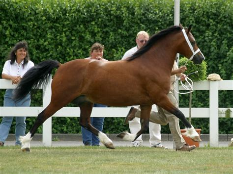 Cob Section C by File C Trot Jpg