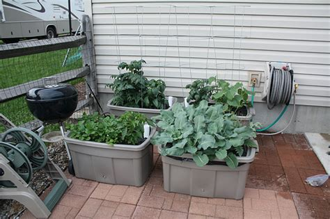 hydroponic container gardening my hybrid hydroponic container garden flickr photo
