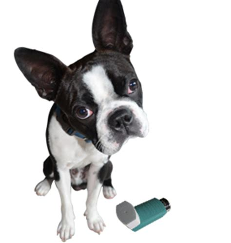 can dogs asthma article image vertical 7 png