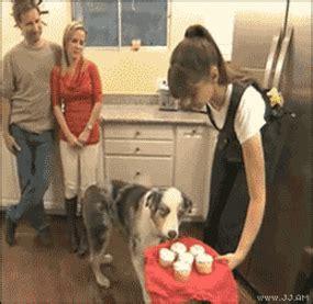 Ptsd Dog Meme - ptsd dog gifs find share on giphy
