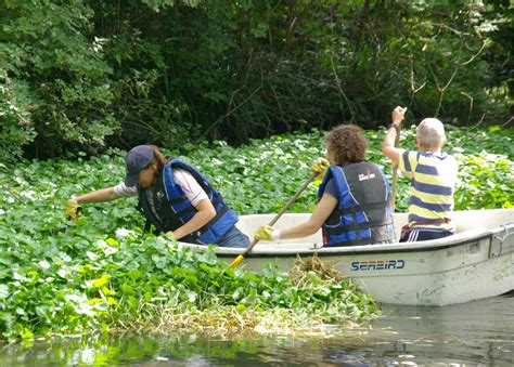 Wandle Touch by Floating Pennywort The Wandle Trust