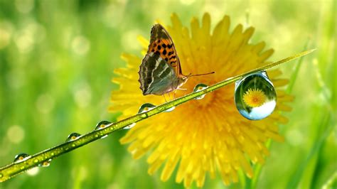 care we butterfly and water drops