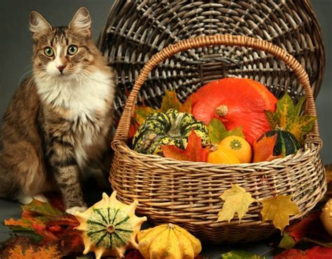 reduce stress   cats   thanksgiving