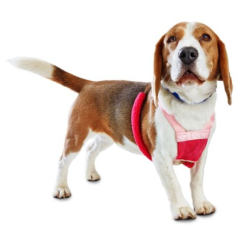 puppy harness petco good2go pink no pull harness petco