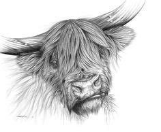 tattoo pen livestock silly highland cow sketch wallpapers backgrounds