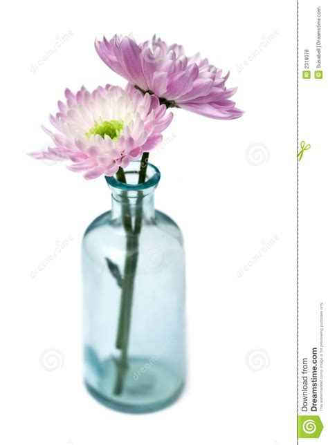 Glass Vase With Flowers by Two Flowers In Glass Vase Royalty Free Stock Photos