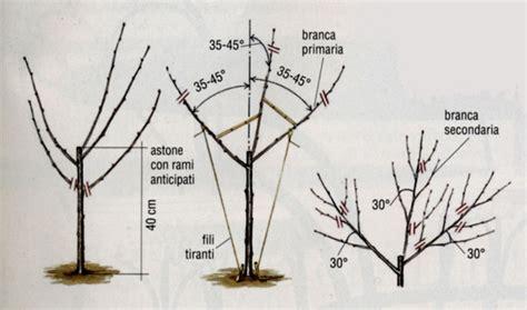 potatura a vaso diamo forma al ciliegio