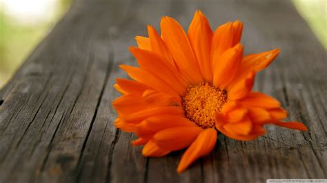 beautiful orange download beautiful orange flower wallpaper 1920x1080