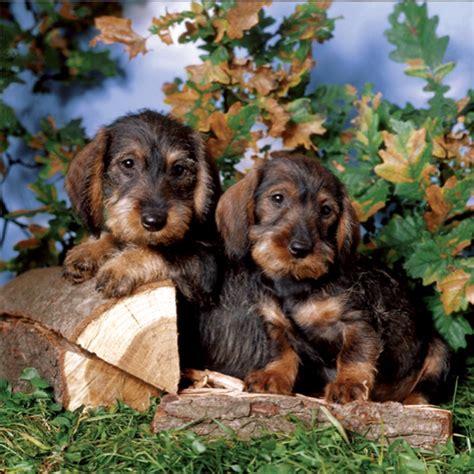 puzzle puppies puppies children s puzzles puzzlewarehouse