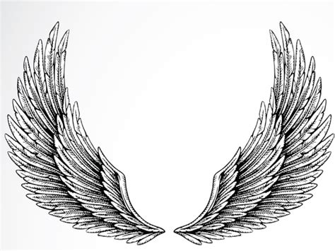 Eagle Wings Drawings Drawn Eagle Wings Spread Wing Designs