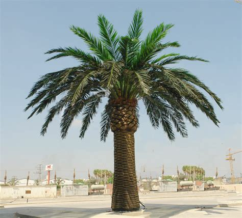 make cheap outdoor artificial date palm tree and tissue
