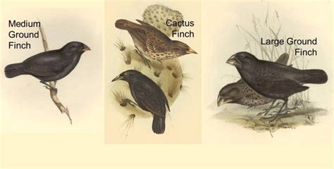 And Rosemary Grant Finches Worksheet Answers