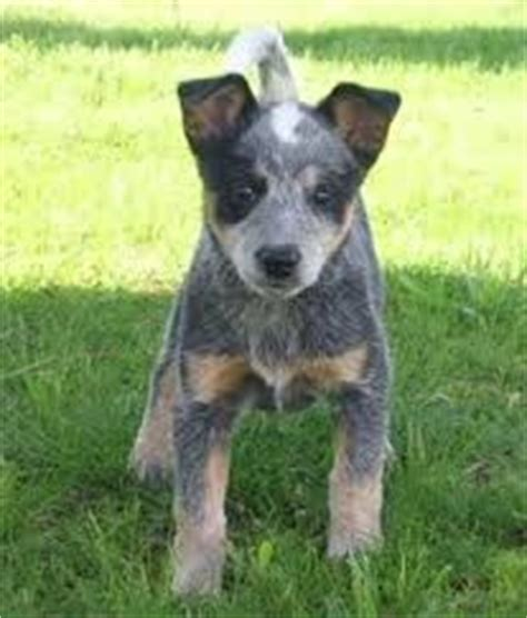 blue heelers s01e01 a womans place 24 best images about heelers best on