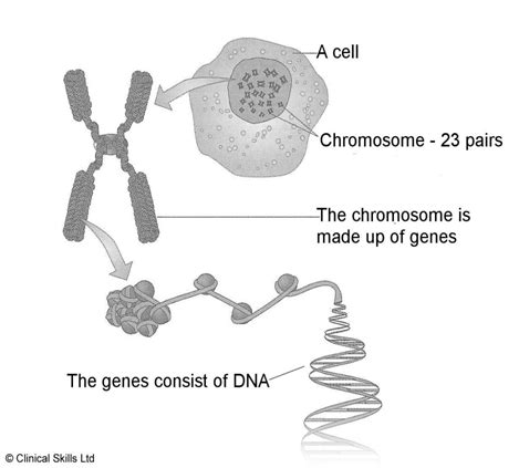 what is a section of a chromosome called eurogentest x linked