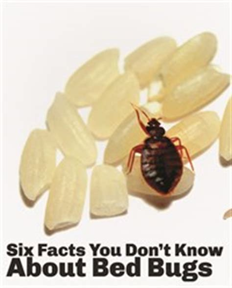 Bed Bug Facts by Servall Pest Six Facts You Didn T About Bed Bugs