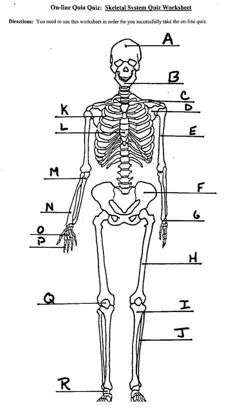 diagram of the skeletal system worksheet skeletal system unlabeled diagram anatomy organ