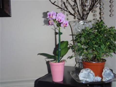 top 28 should i repot my orchid should i repot this phal now appleyard flowers flowers