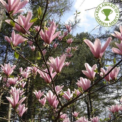 magnolia heaven scent scented magnolia buy heaven scent