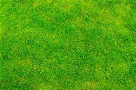 Rasen Braune Stellen 4934 by Rasen Wird Braun Das K 246 Nnen Sie Tun