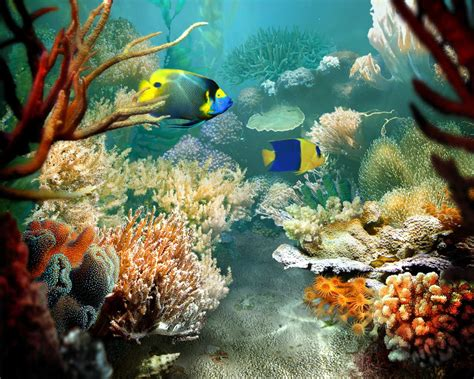 fish for life a fish pictures tropical fish