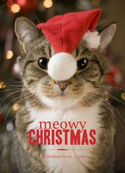 images  christmas card sayings creative fun unique  pinterest cats