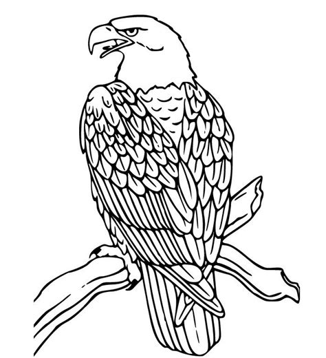 eagle template animal templates free premium templates
