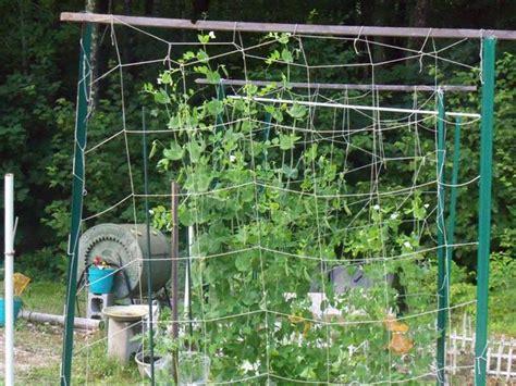 4x4 Trellis optimal trellis system for 4x4 tomato box