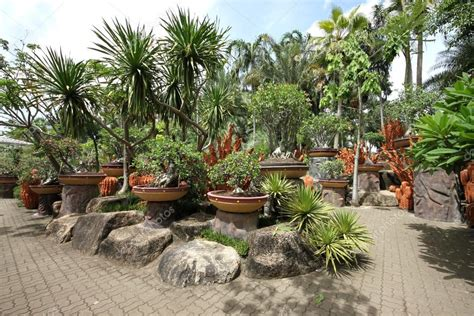 jardim decorado pedras e grama uma composi 231 227 o de vasos de flores tropicais pedras e
