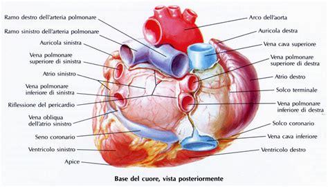 vasi coronarici il pericardio 232 una sottile membrana di origine mesodermi