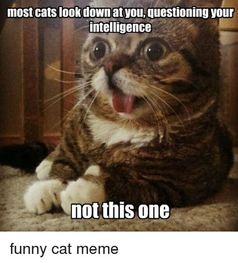 Stupid Cat Meme - most cats look down at you questioning your intelligence